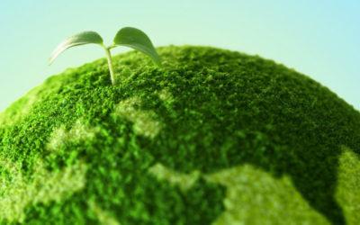Come avere un packaging completamente green: dai materiali alle etichette ecosostenibili